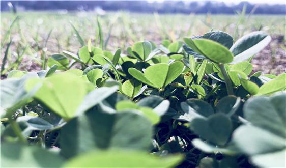 易拉罐包装优势突出 灌装线市场未来仍将增长